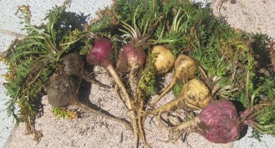 植物系原料の精力剤