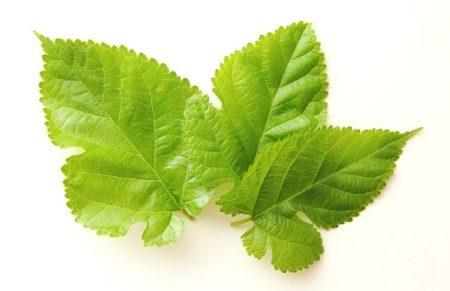 桑の葉性力剤の効果と口コミ