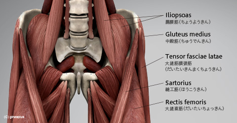 股関節の柔らかさと精力